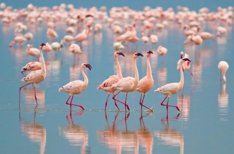 flamingo.1